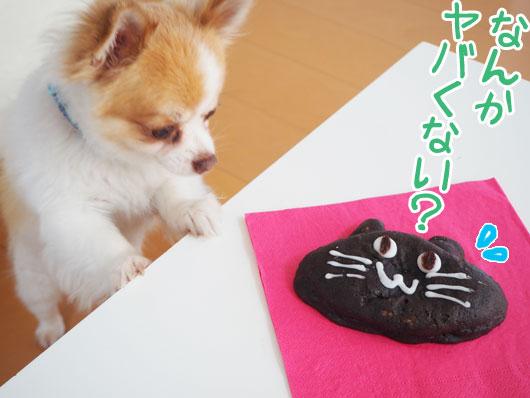 猫のパンと犬