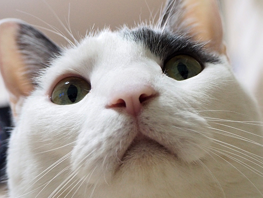 猫のマズル
