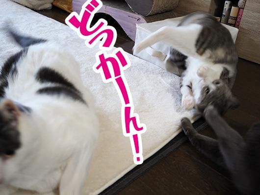 吹き飛ばされた猫