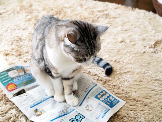 求人誌を見る猫