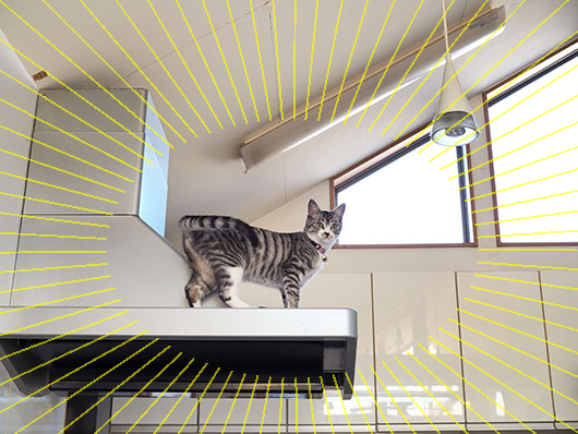 レンジフードの上の猫