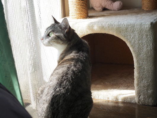 キャットタワーと猫