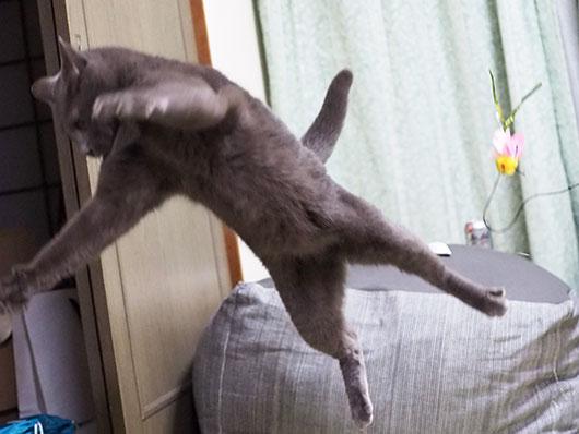 ぶっ飛ぶ猫