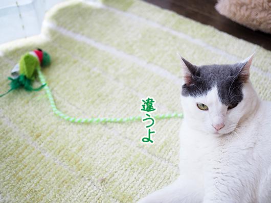 猫じゃらしと猫