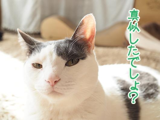 文句を言う猫