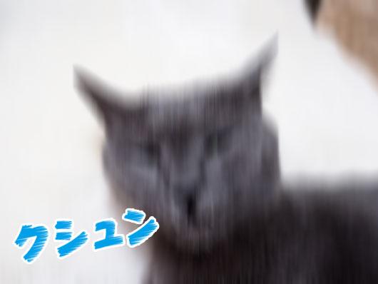 くしゃみをする猫