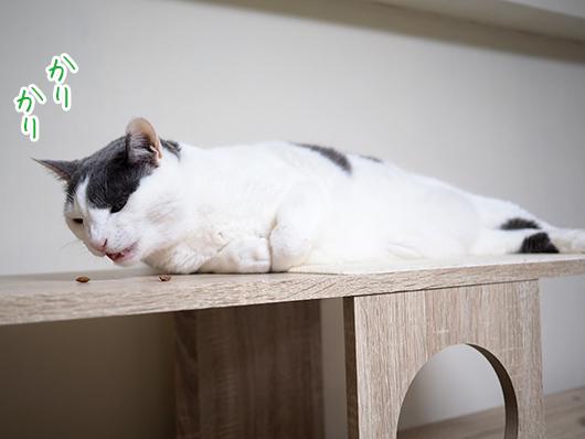 寝ながら食べる猫