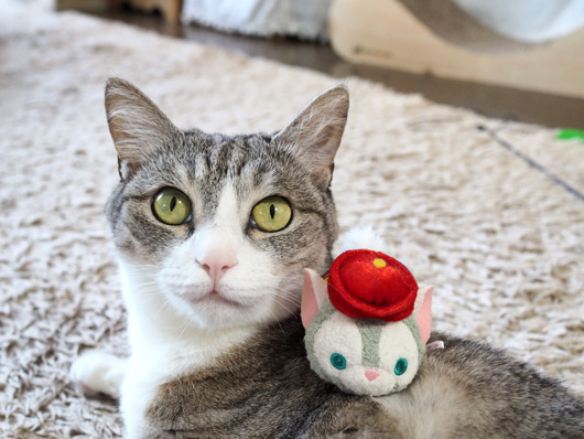 猫とジェラトーニ