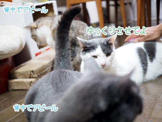 順番待ちの猫
