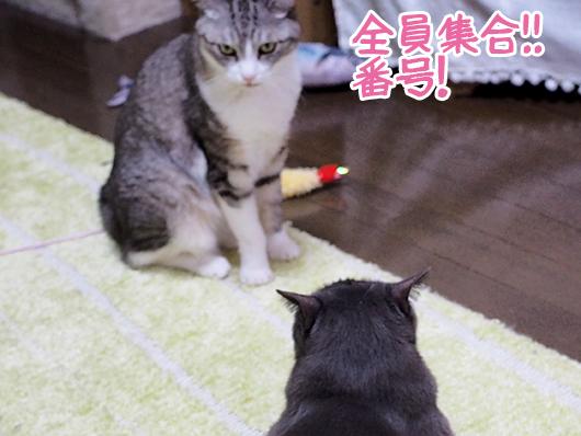 命令する猫