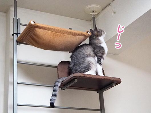 壁を見つめる猫