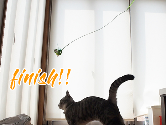 着地する猫