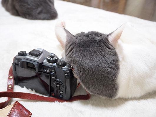 猫のうなじ