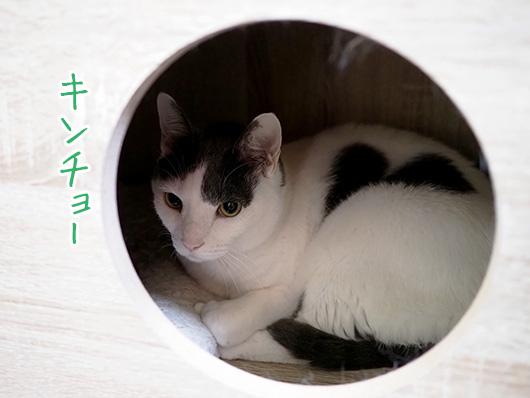 緊張する猫