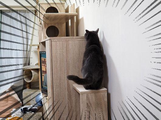 キャットウォークに登る猫