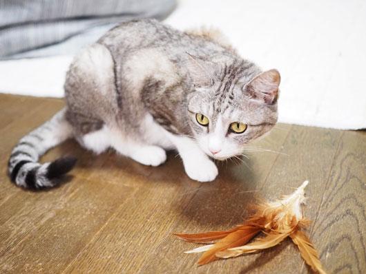羽を見る猫