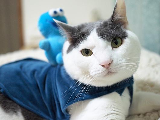 セサミストリート猫