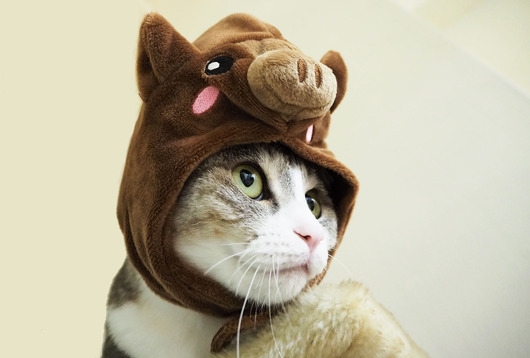 コスプレ猫