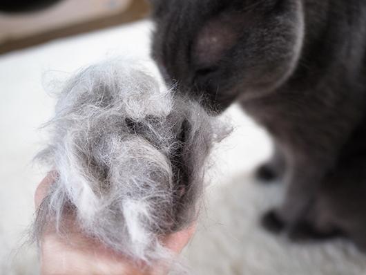 ファーミネーターする猫