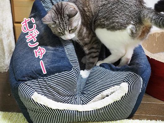 キャットハウスを踏みつける猫
