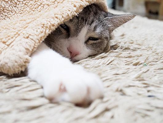 寒い夜の猫