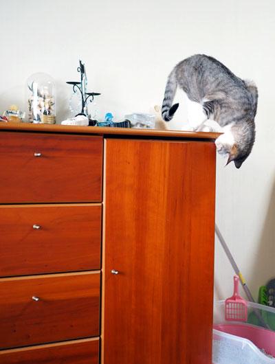 猫じゃらしを探す猫