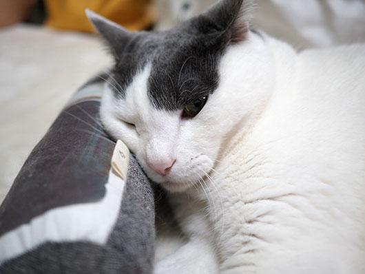 枕にする猫