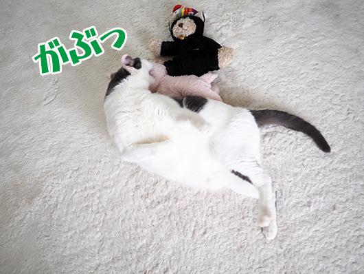 かぶりつく猫