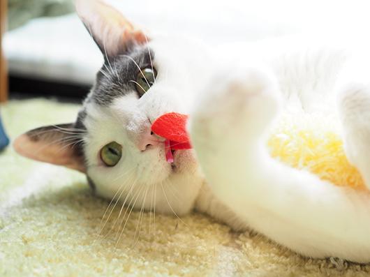 食いしん坊な猫