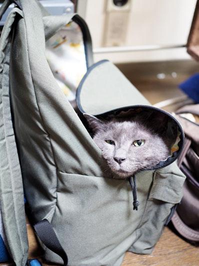 リュックの中の猫