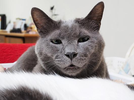 変な顔の猫