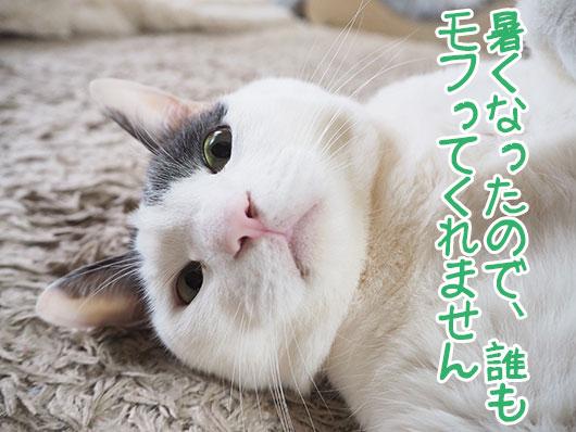 不満のある猫