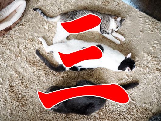 三の字に寝る猫