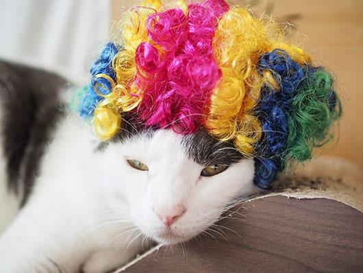 ハロウィンの猫