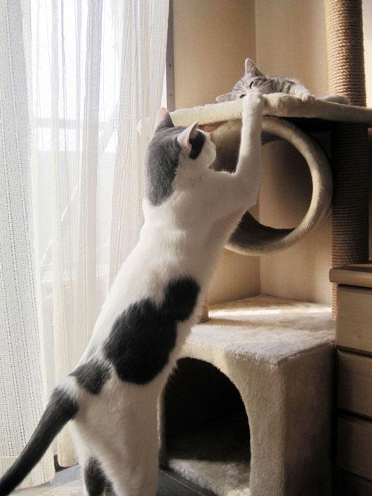 子猫を眺める兄猫