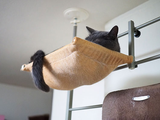 ハンモックの上の猫