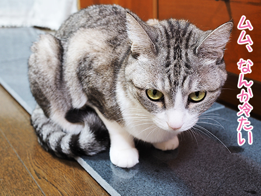 石を確認する猫