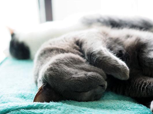 幸せそうな寝顔の猫