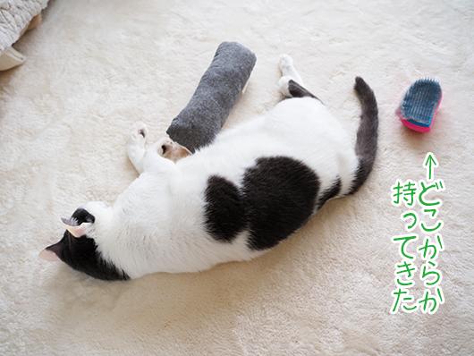 寝っ転がる猫