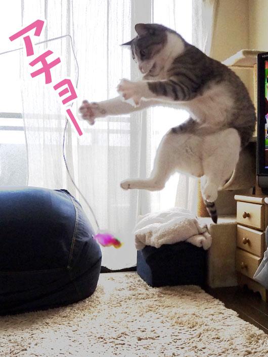 飛び上がる猫
