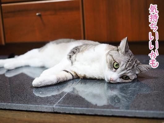 ひんやりする猫