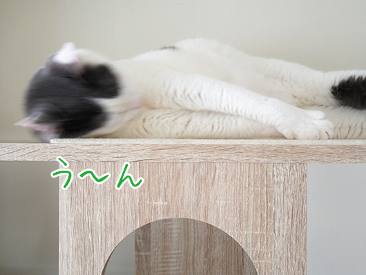 キャットウォークの上の猫