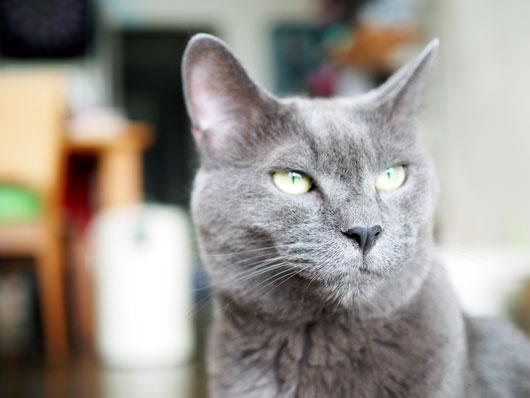 キリリとする猫