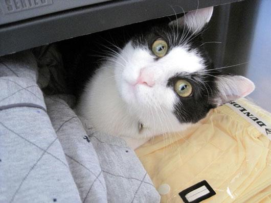 引き出しの中の猫