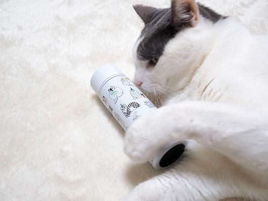 ボトルが気になる猫