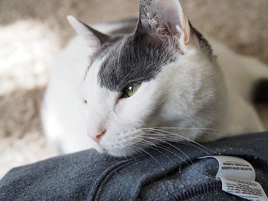 アゴ枕をする猫