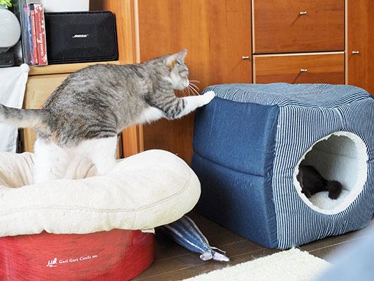 移動する猫