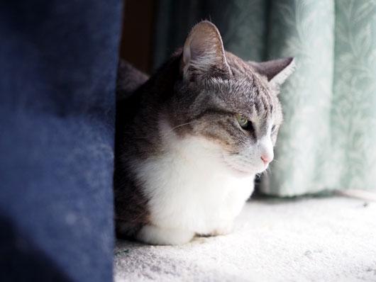 ひとり考える猫