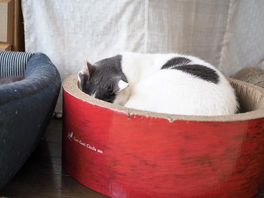 爪とぎサークルと猫