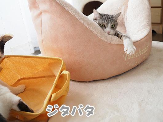 ジタバタする猫